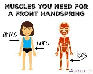 muscles you need for a front handspring