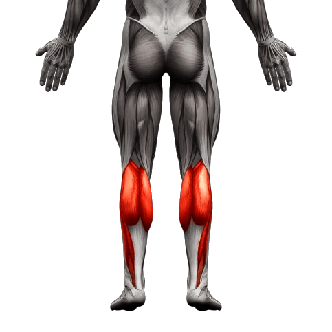 calf muscle used05 1