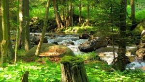 Hűsítő erdei séta