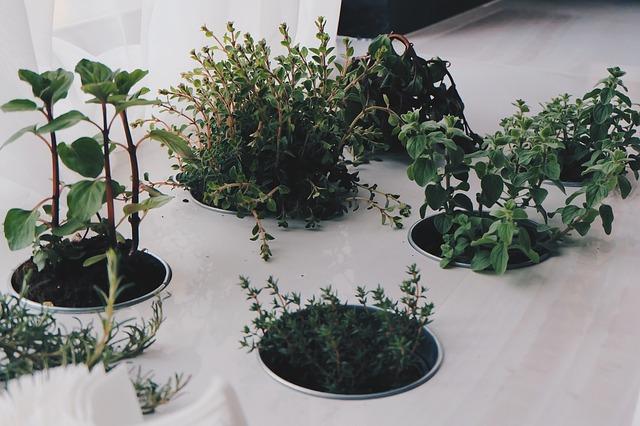 Gyógynövénykert a lakásban