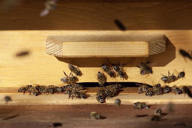 propolisz, propoliszos méz, propolisz hatásai