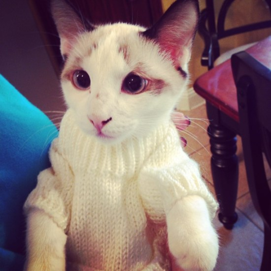 Kitty in a Sweater