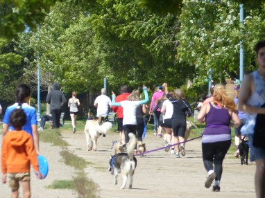 Woof fit 2015 165