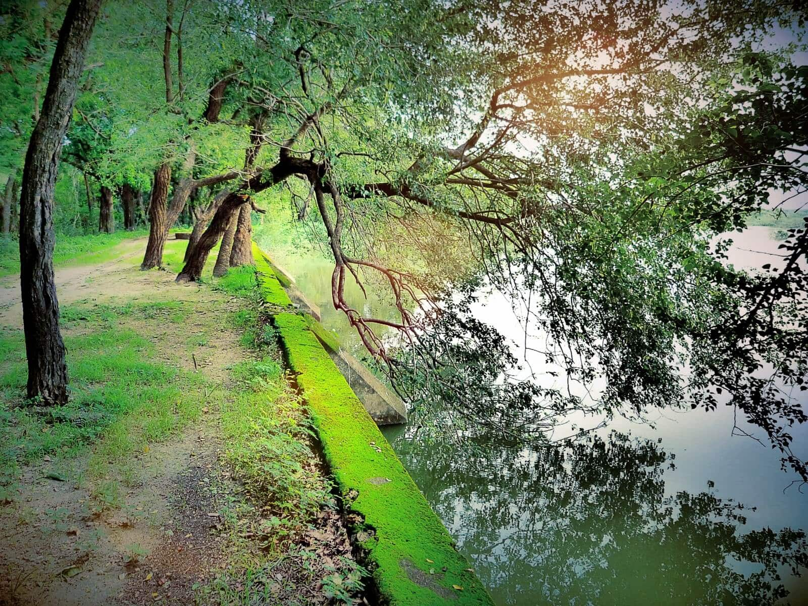 The path by the lake at Shahpura Bagh