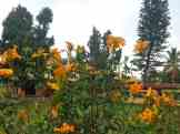 Bylakuppe Flowers pic by ASUS Zoom 3