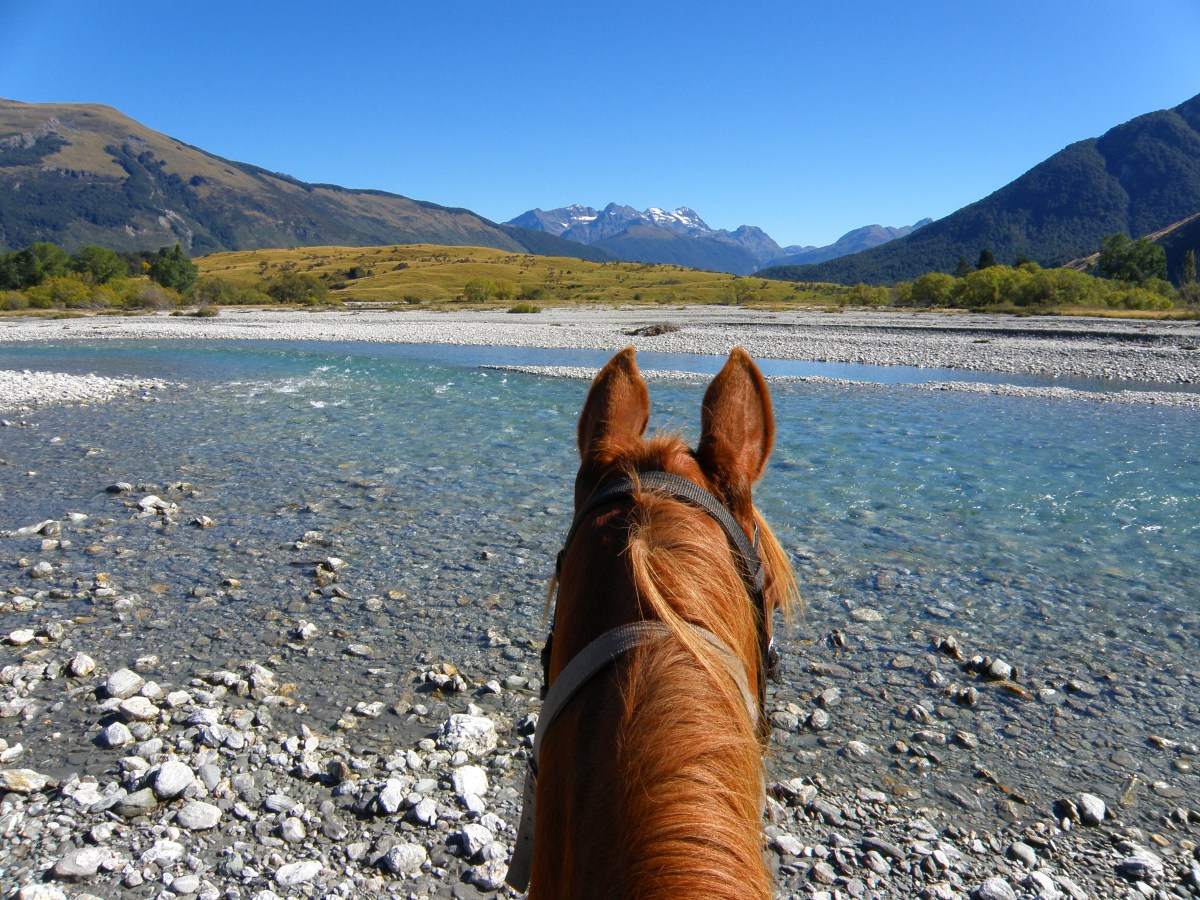travel new zealand horseback riding
