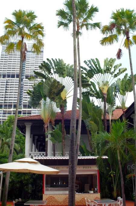 Traveler's palms in the courtyard of Raffles Hotel
