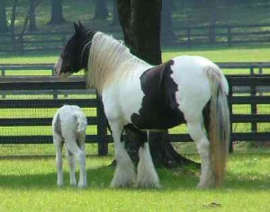 Crown-Darby+2005colt