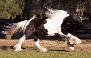Fred-Walker-gallop