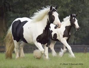 GGRose-Foal2004