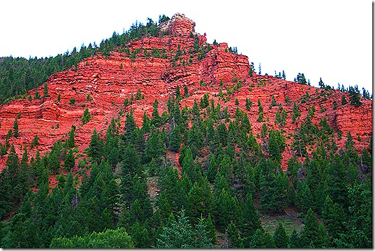 Red Rock cliff trees 4