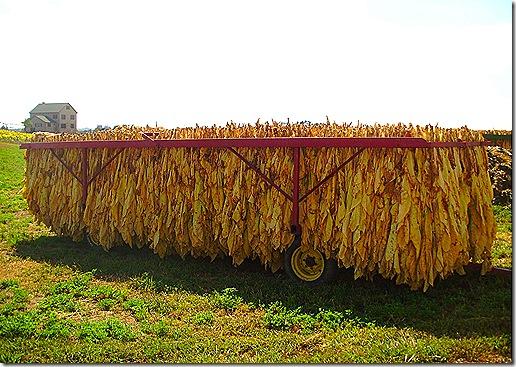 Tobacco rack