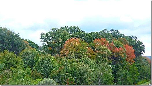 Turning  leaves 2