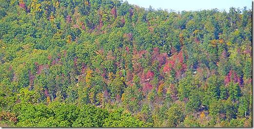 Virginia Fall colors