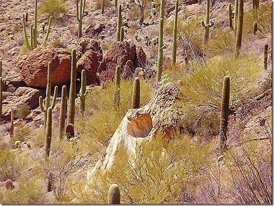 Gates Pass cactus