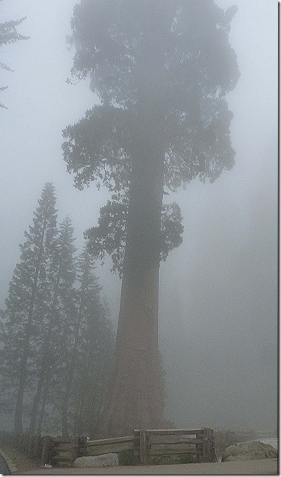 Giants in the mist 2
