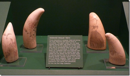 Scrimshaw whales teeth