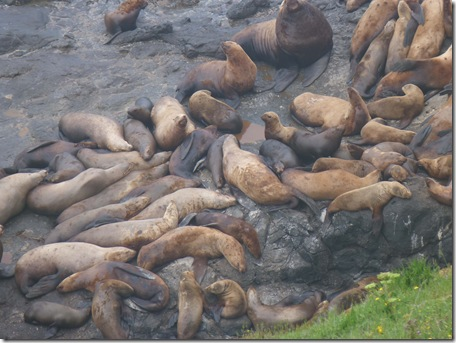 Sea lion group 2