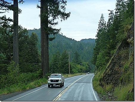 US 101 redwoods
