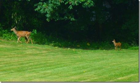 Deer at Elks lodge