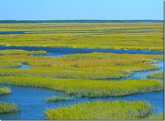 Georgia wetlands