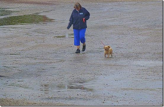 Walking dog 2