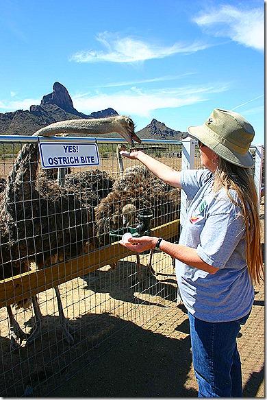 Terry feeding ostrich 8