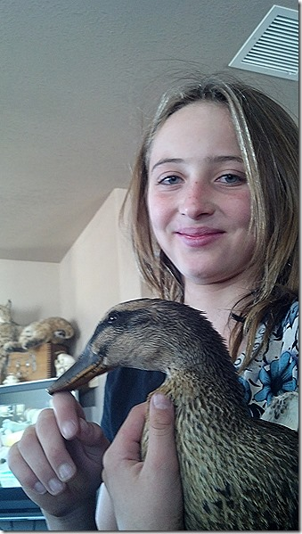 Hailey duck