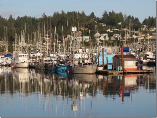 Newport marina 5