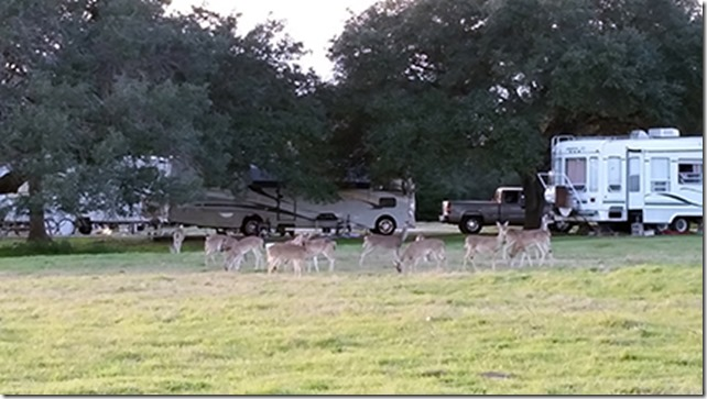 Deer and RVs small