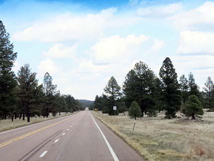 US 60 trees