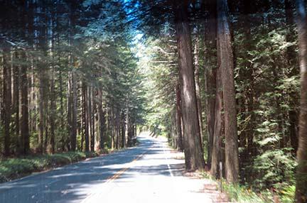 US 101 trees small