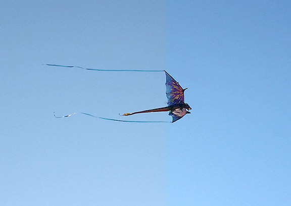 Dragon fly small