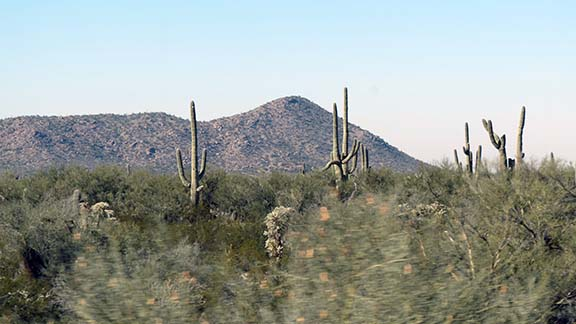 Twisted saguaro small