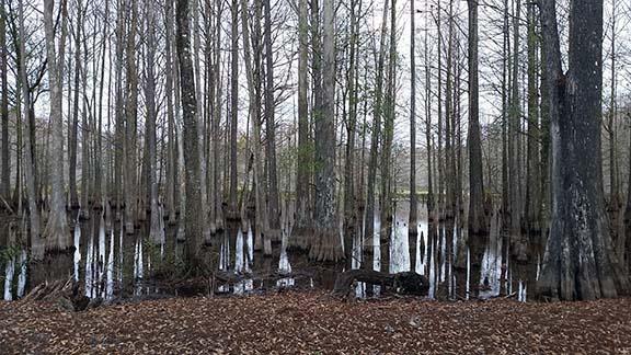 Bushnell swamp small