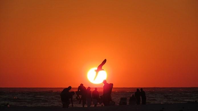 Sunset bird small