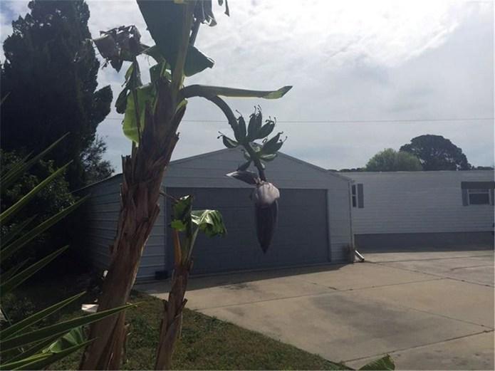 tree-and-garage