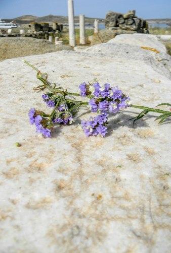 Delos ruins,flower on wall-0385