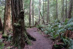 Forest paths in Larrabee SP