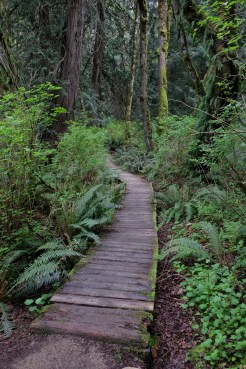 Forest boardwalks in Larrabee SP