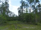 There's Just Something About the Swamps that Soothe My Senses!