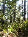 Breathtakingly Beutiful! Nature's Lush Splendor