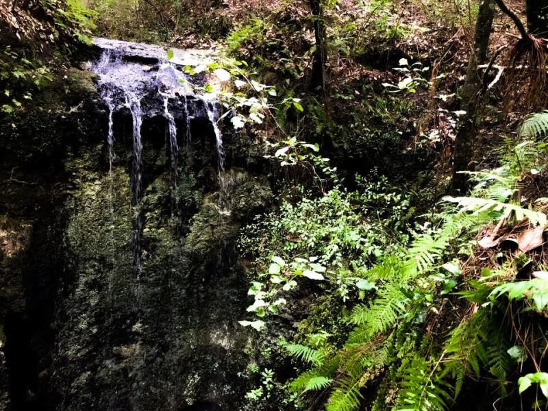 View fromTiny Waterfall into the Sink Hole, Falling Waters State Park, Florida, one of the US State Parks.