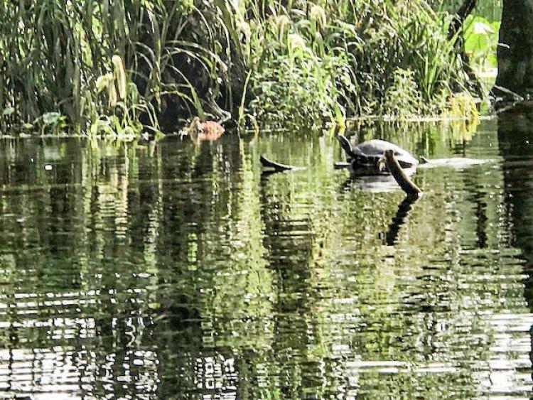 Silver Springs State Park, Ocala, Florida, Kayaking Adventure
