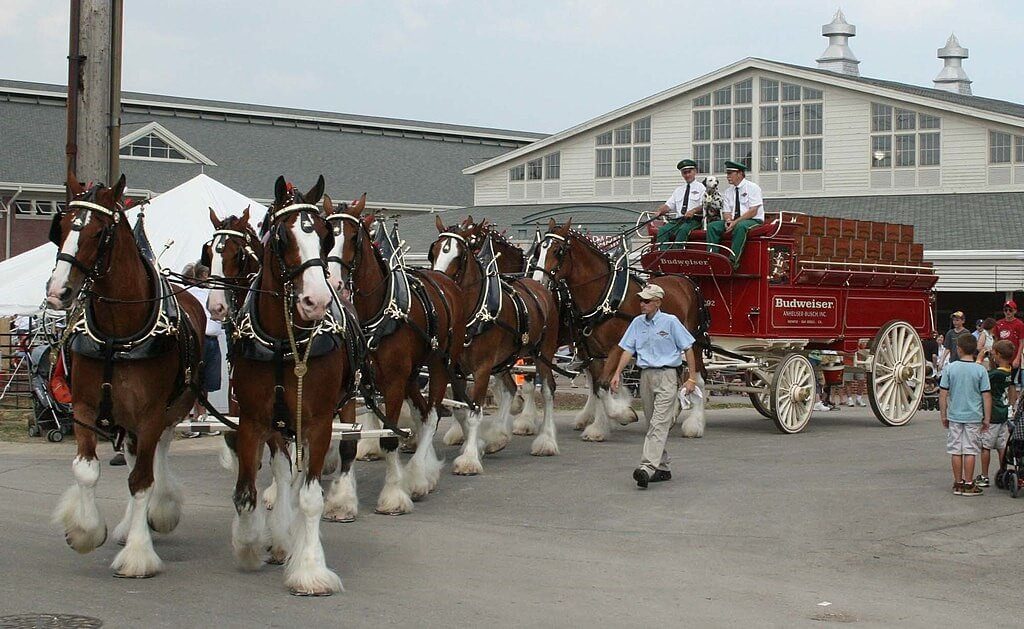 St Louis Getaway Attractions, Budweiser Clydesdale Team.