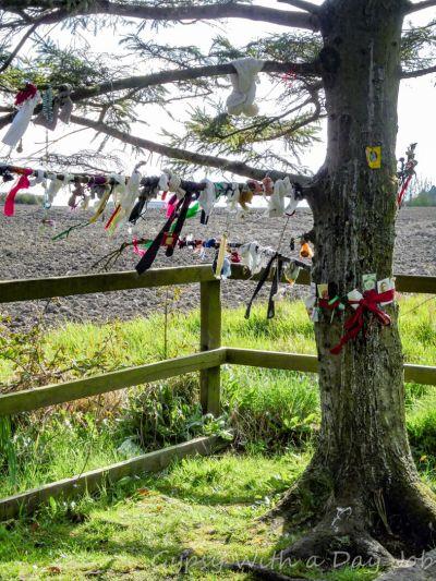 Irish countrysie magic, cloughtie tree.