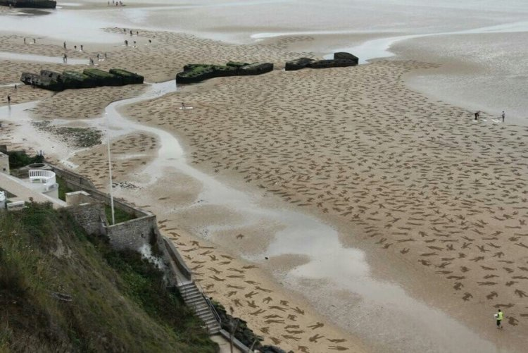 Normandy Beaches Sites of Remembrance, the Fallen Project.
