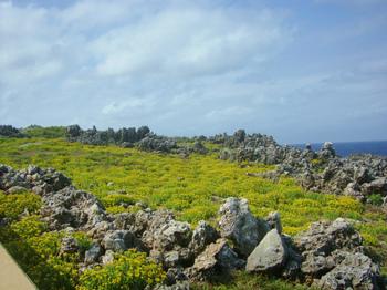 真黒岬の花畑