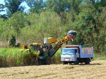 南大東島ハーベスターで収穫中