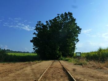 南大東シュガートレイン線路跡